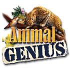 Animal Genius 游戏