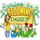 Blooming Daisies 游戏